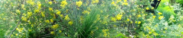 cropped-wattle-grasstree-june2012.jpg