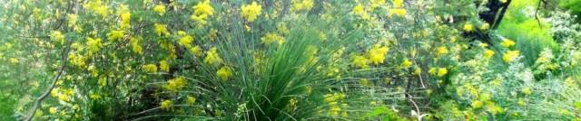 cropped-wattle-grasstree-june2012.jpg
