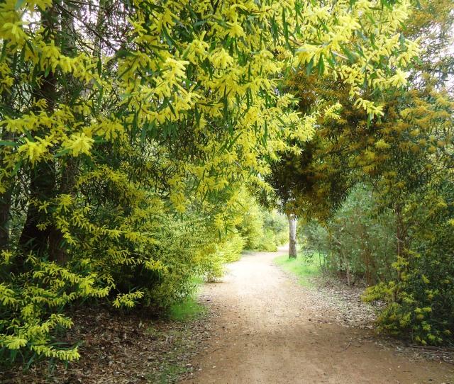wattle trail 25Aug
