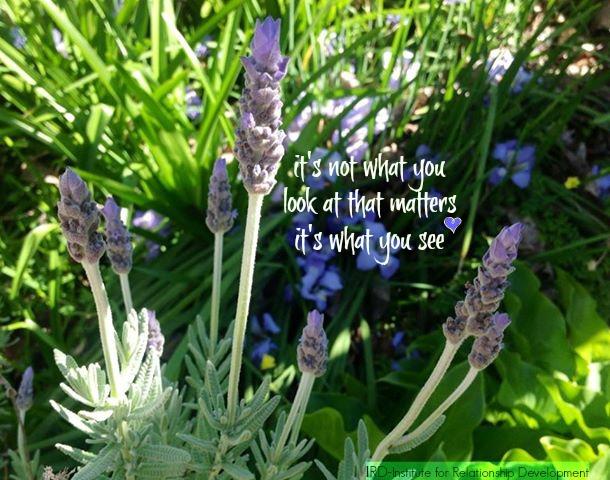 lavender quote IRD 2