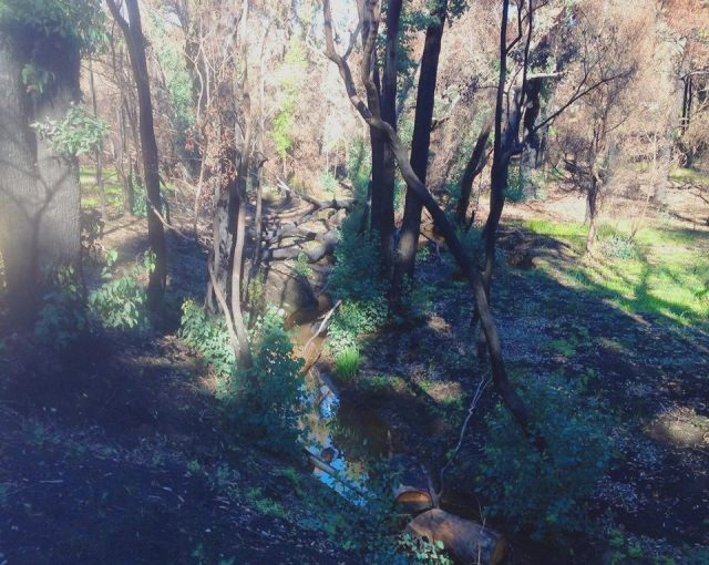 WFH-creekbed1