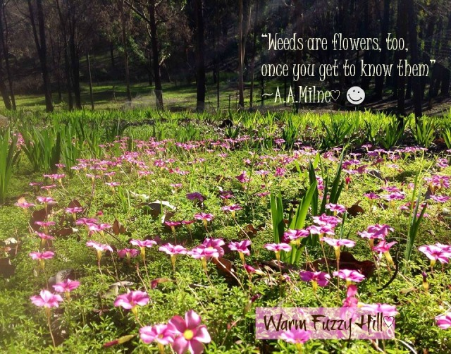WFH-pink-clover-quote
