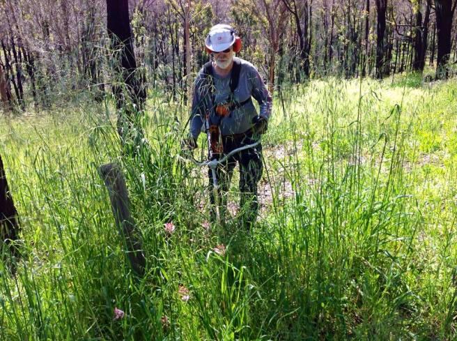 WFH-Spring-weeds-Sh
